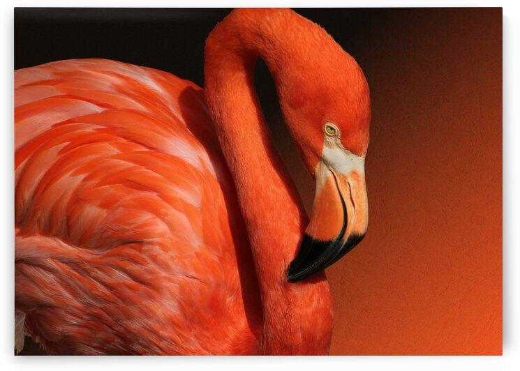 Ultimate Orange Flamingo 7x5 by Studio Dalio