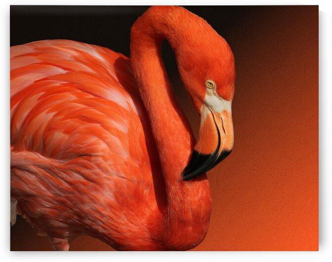 Ultimate Orange Flamingo 10x8 by Studio Dalio