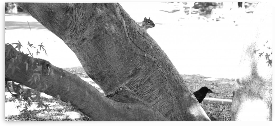 Squirrel and Crow by Greg Scafidi Photography