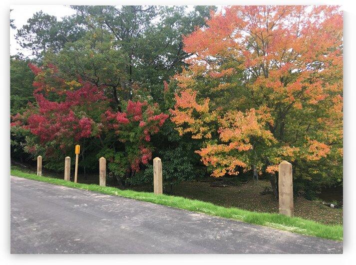 Autumn Stroll by Bene Auguri Photography