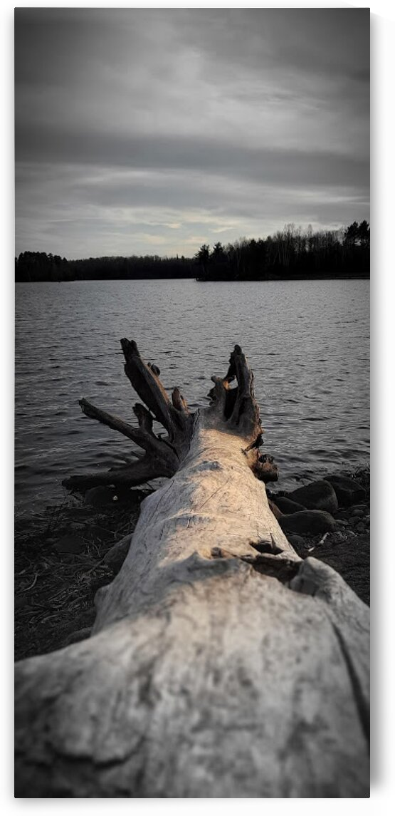 DriftwoodLogBondFallsMichigan by Bene Auguri Photography