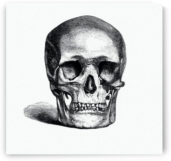 Vintage European style skull engraving from Annals of Winchcombe and Sudeley by Mutlu Topuz