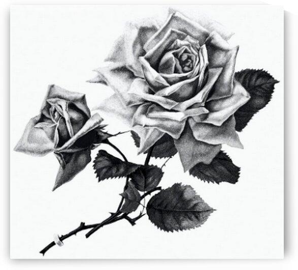 Rose from Songs  by Mutlu Topuz