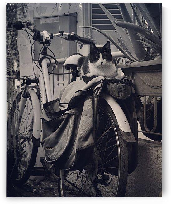 A stray cat.... by Christiana Hepi