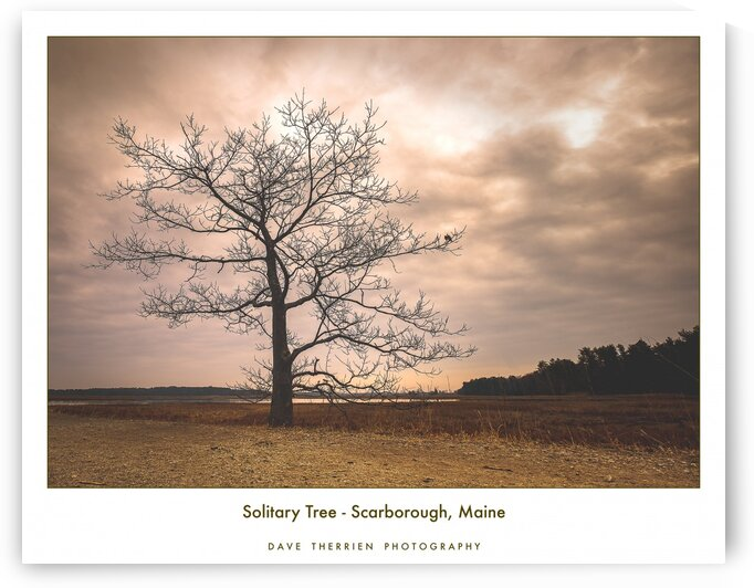 Solitary Tree by Dave Therrien