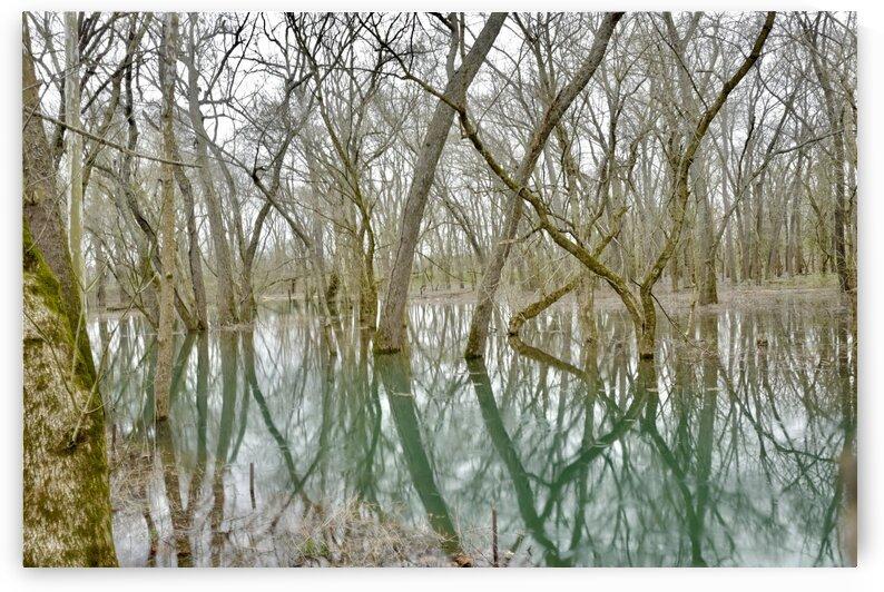 Kentucky Swamp by Wowey