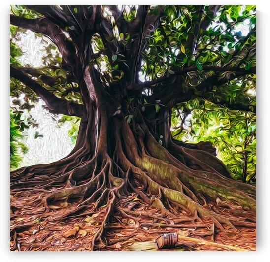 A large tree with branchy roots. by Ievgeniia Bidiuk