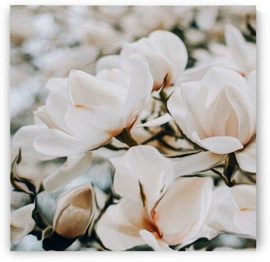 Blooming white magnolia.  by Ievgeniia Bidiuk