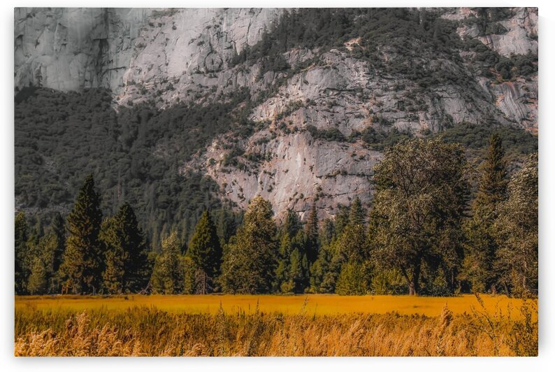 green tree with mountain background at Yosemite national park California USA by TimmyLA
