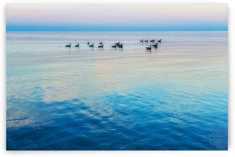 Geese on the lake by Katharine Asals Photography