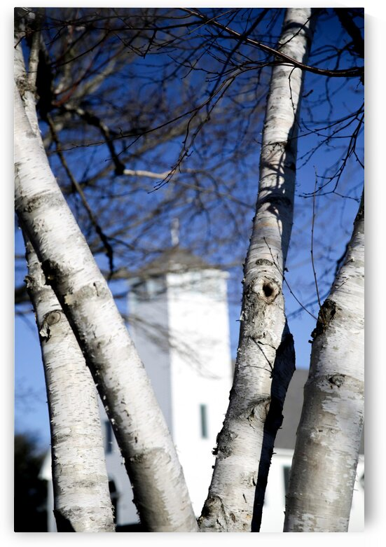 St. Andrews Anglican Church and Birch Tree by Anka G