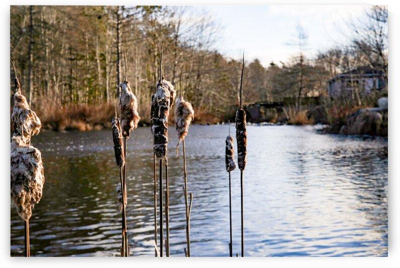 The Mill Pond 3 by Anka G