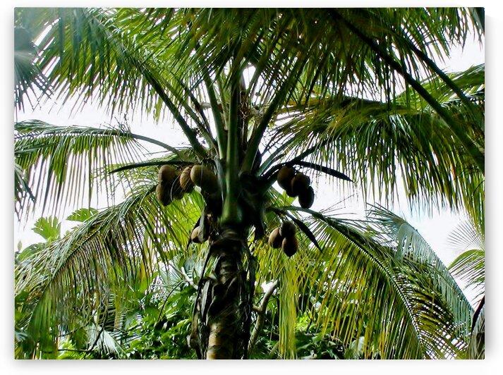 Tropical fruit tree by by Tara