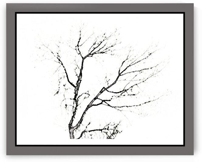 Antique charcoal sketch tree  by Ellen Barron O-Reilly