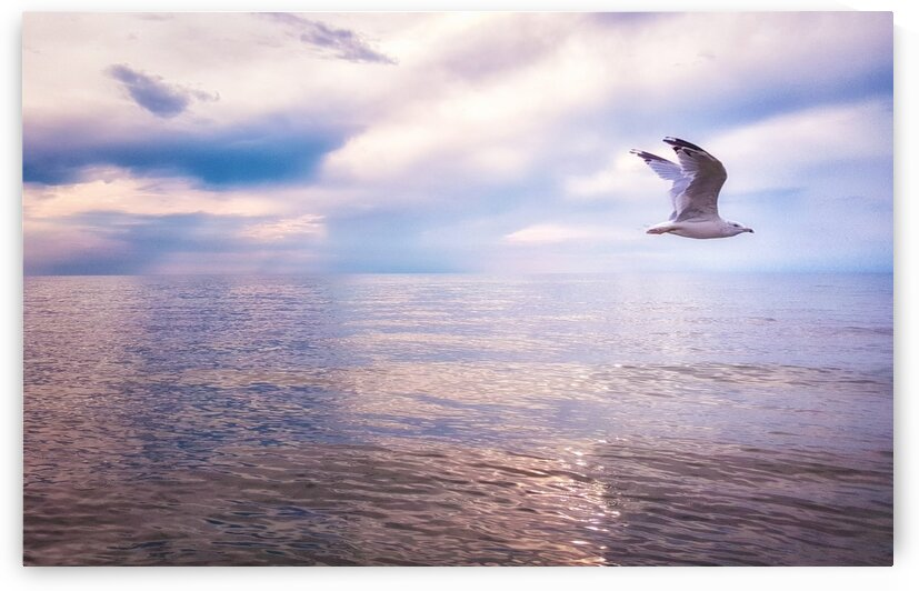 Seagull in flight by Katharine Asals Photography