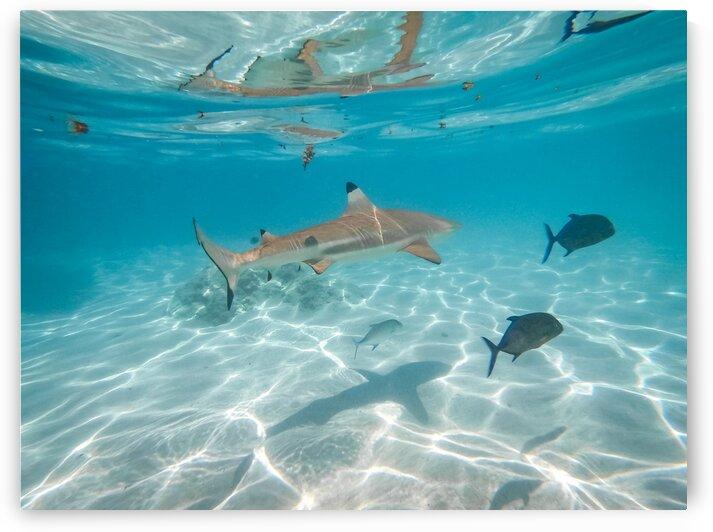Underwater with sharks 1 by Samantha Hemery