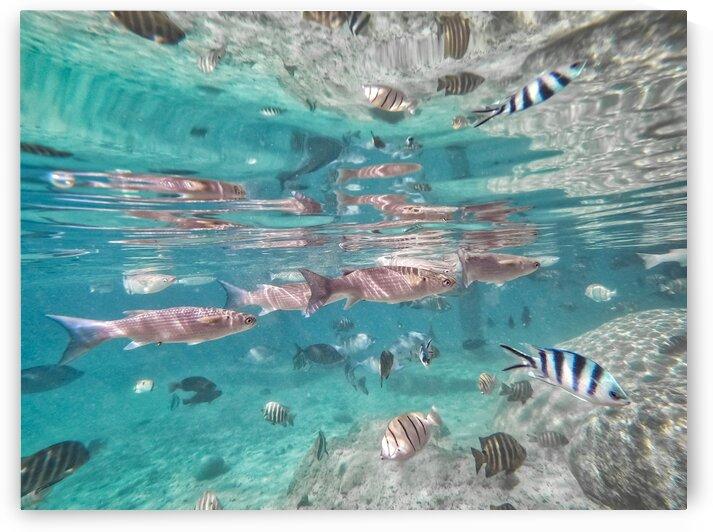 Underwater with fish 3 by Samantha Hemery