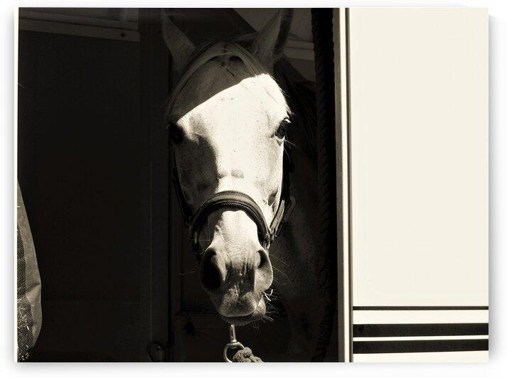 Horse bw by by Tara