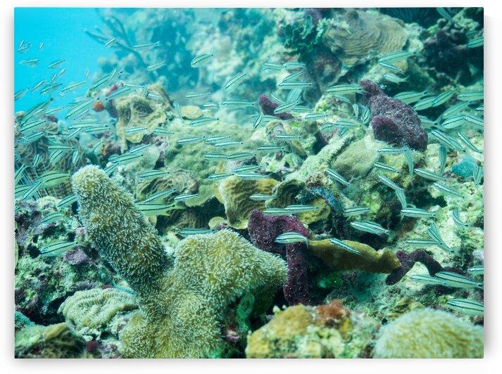 Coral Reef by AleSivi79