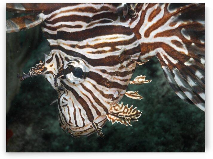 Lion Fish by AleSivi79