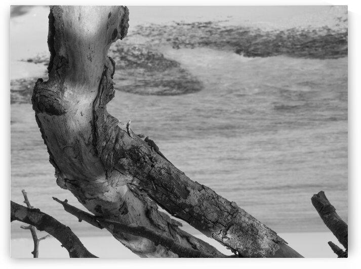 Beach Wood by AleSivi79
