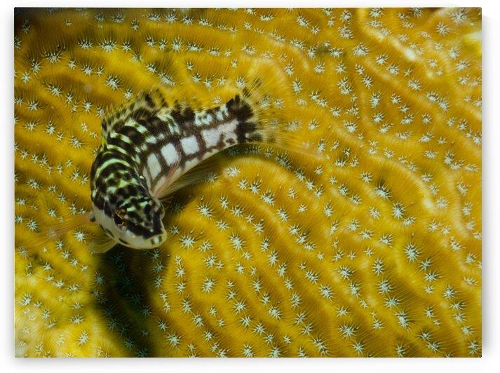 Underwater fish stripes  by AleSivi79