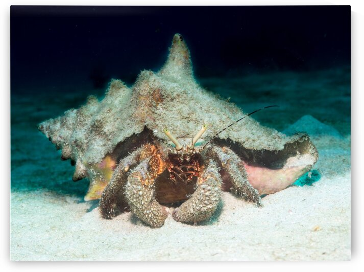 Underwater Crabshal by AleSivi79