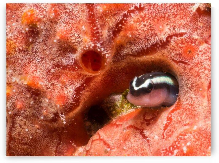 Underwater Goby by AleSivi79