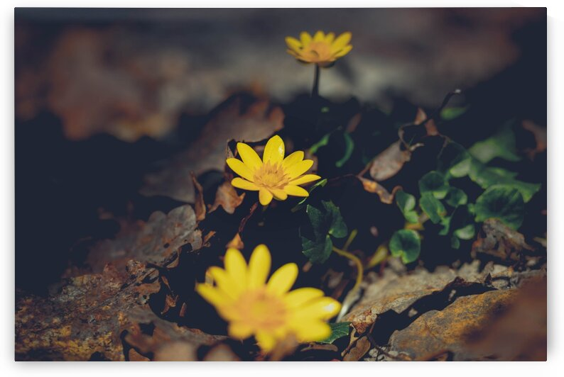 Forest yellow flower Print by G View Photography