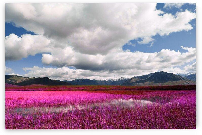 Alaskan wilderness landscape   5   Infrared   Purple by ASAR STUDIOS