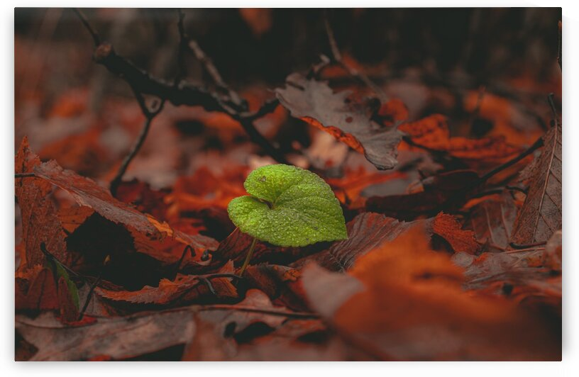 Lonely Leaf Autumn  by G View Photography