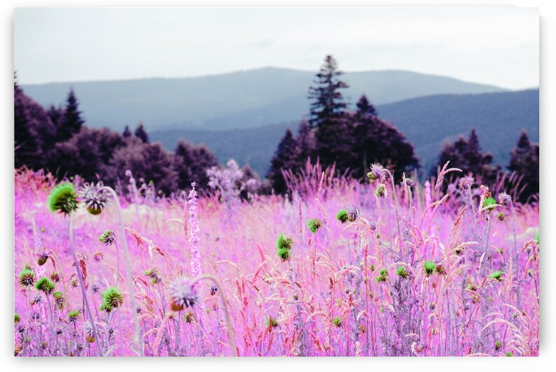 Blooming flowers in field behind green mountains   Infrared   Purple by ASAR STUDIOS