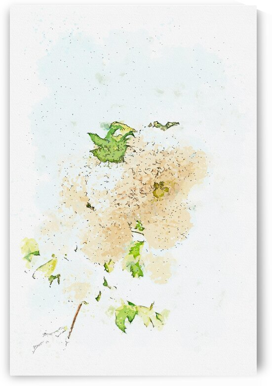 Blossoming Viburnum opulus tree with delicate white flowers on sunny day  watercolor  ca 2020 by Ahmet Asar by ASAR STUDIOS