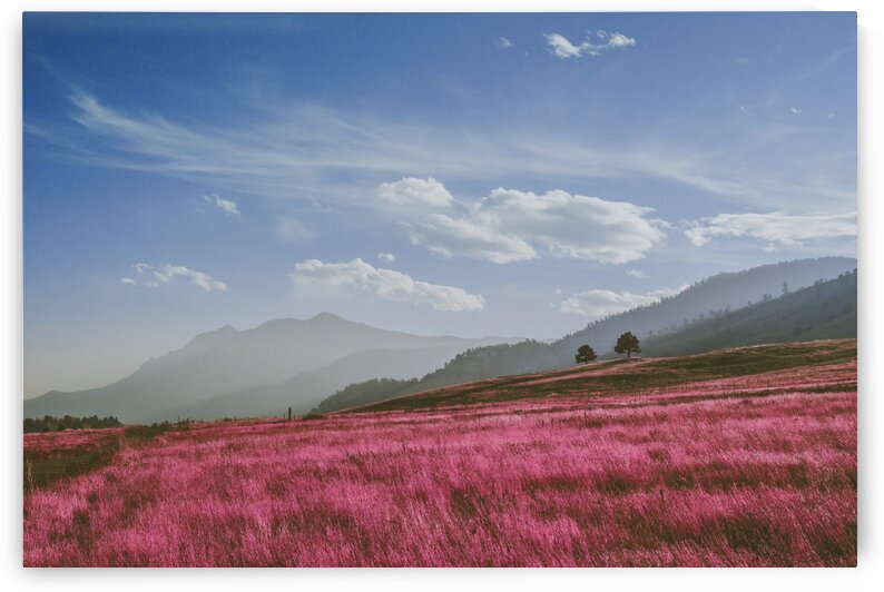Boulder  United States   Infrared   Purple by ASAR STUDIOS