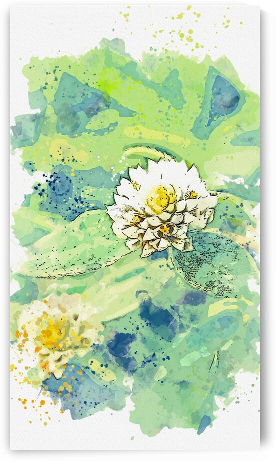 Blooming white clover on grassy meadow  watercolor  ca 2020 by Ahmet Asar by ASAR STUDIOS