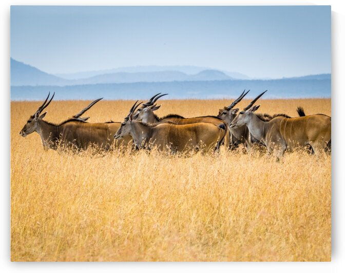 Buffalo fields by Lynnette Brink