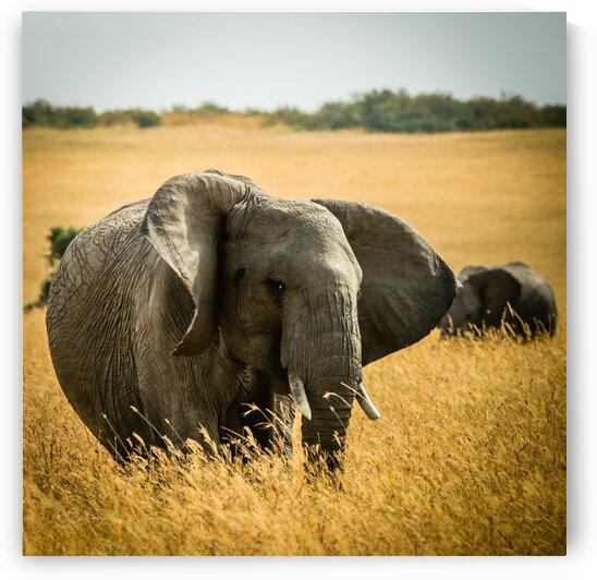 Elephant Grazing by Lynnette Brink