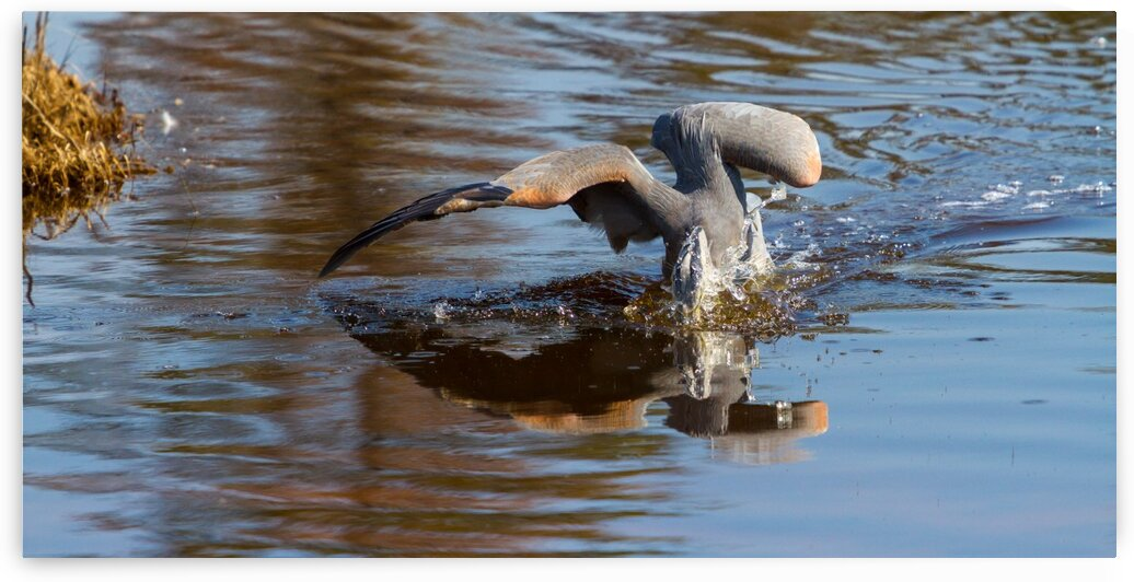 Great Blue Heron ap 1773 by Artistic Photography
