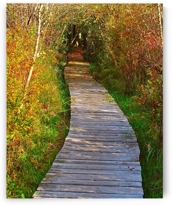 Covered Pathway by Limone Photography