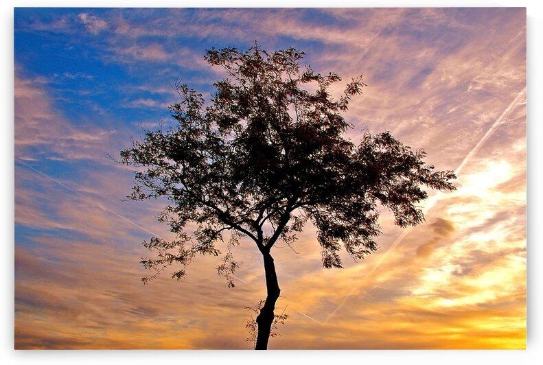 Desert Sunrise by Limone Photography