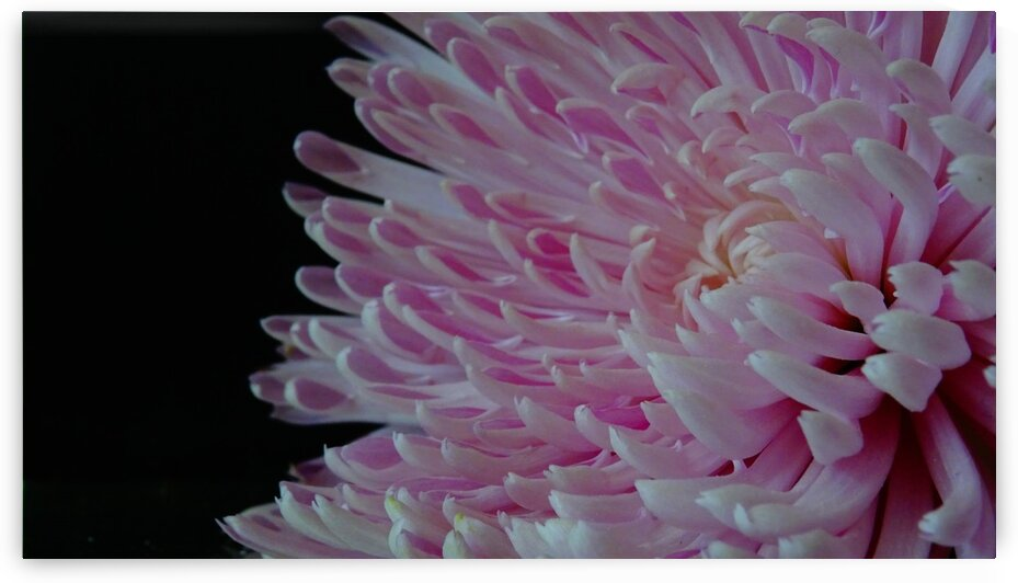 Abstract flower by Roseanna content
