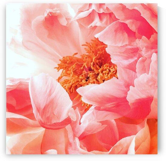 PinkComfort by Lynnette Brink