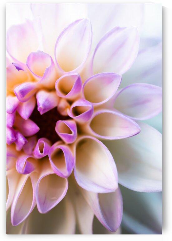 PurpleHaze by Lynnette Brink