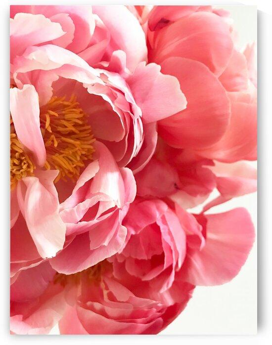PinkDelight by Lynnette Brink