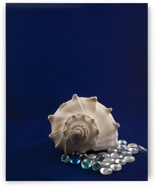 Spiral Conch Shell With Colored Glass by Jacqueline Sleter