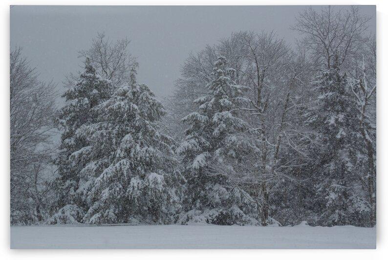 Treeline ap 2938 by Artistic Photography