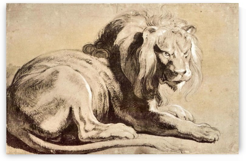 Study of a Lion by Rubens by Rubens
