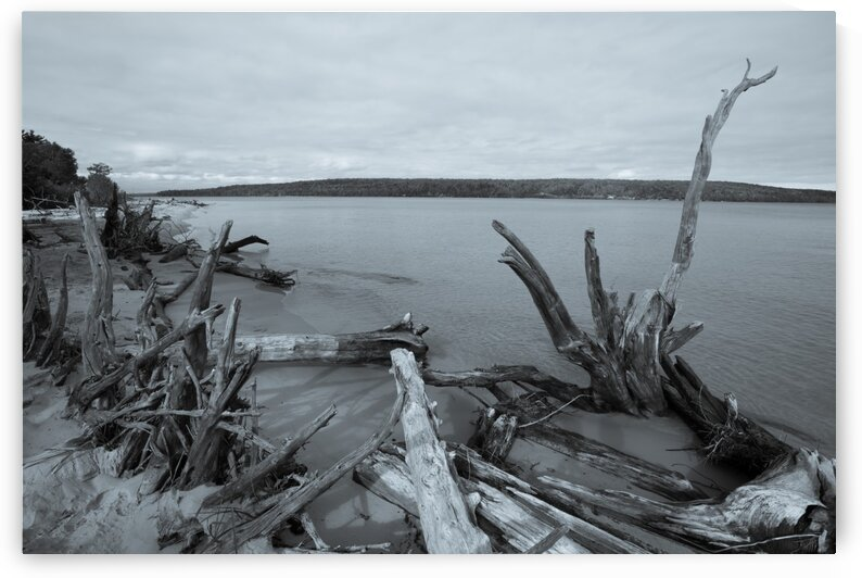 Driftwood ap 2490 B&W by Artistic Photography