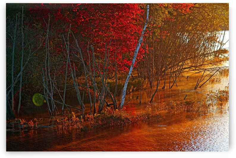 Autumn Colors At Sunrise by Deb Oppermann