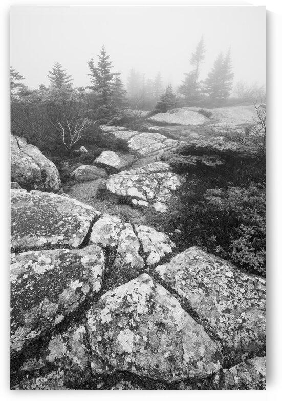 Lichen ap 2349 B&W by Artistic Photography
